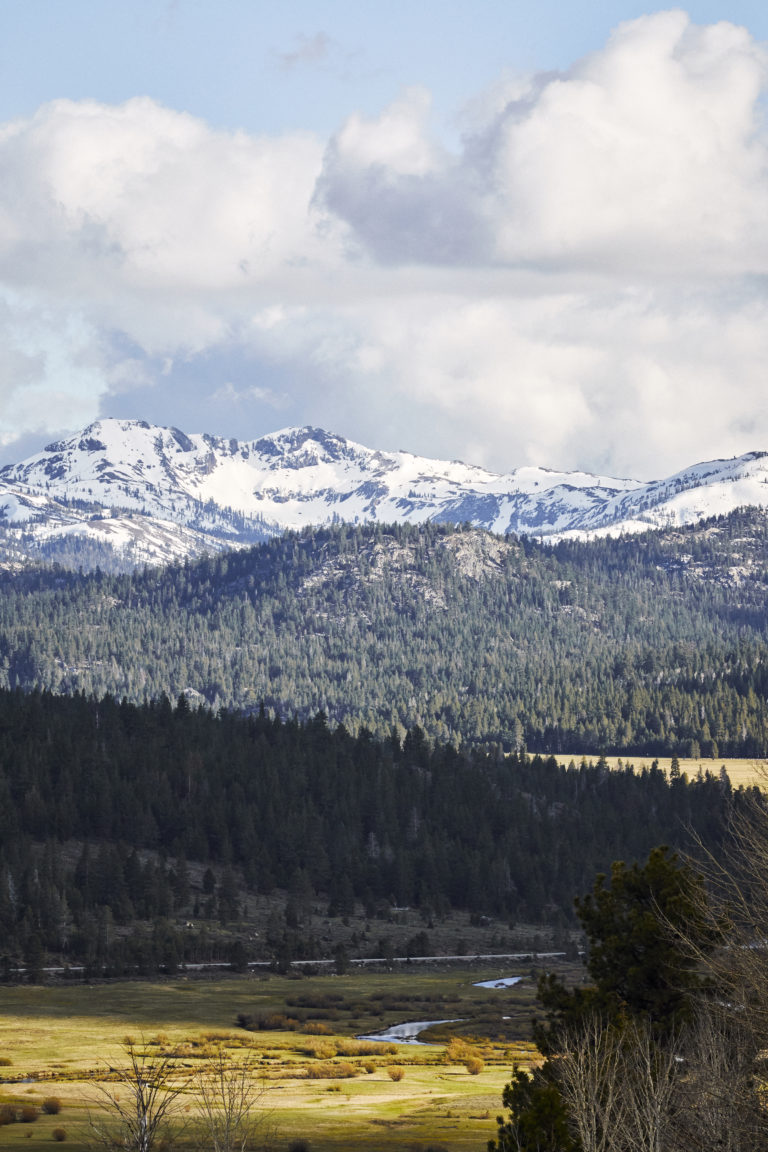 Landscape photo of a forrest and snow covered mountains in the distance